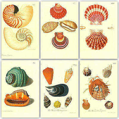 200 Shell colour plates from 3 Antique Books on 1 DVD