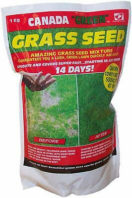 1kg of Genuine Original Canada Green Grass Seed Fast Growing 500sq ft free p&p