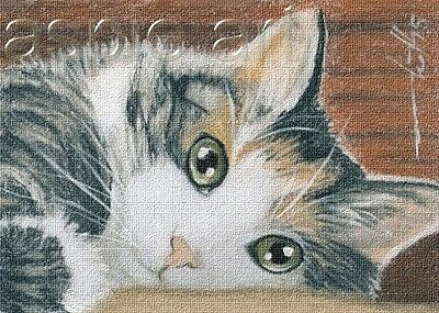 ACEO print limited edition tortoiseshell cat  by Anna Hoff