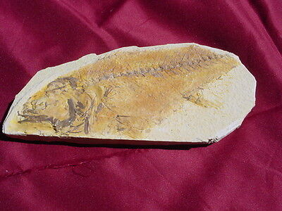 Large (Millions Of Years Old) Partial Fish Fossil For Display N164