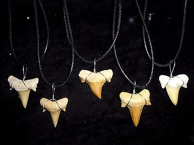 Real fossil Shark tooth necklace beachwear surfer, sharks teeth