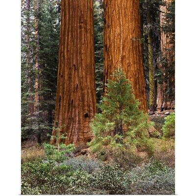 Poster Print Wall Art entitled California, Yosemite National Park, Giant