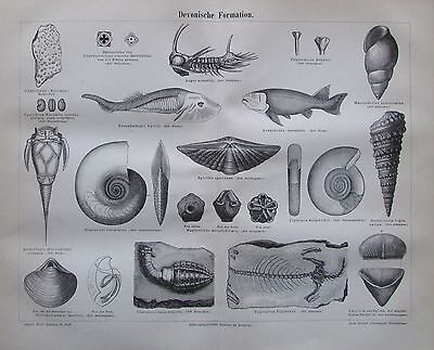 1888 DEVONISCHE FORMATION original antiker Druck antique prints Lithografie