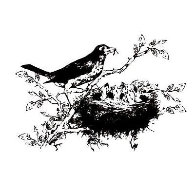 ROBIN w/ Babies in nest unmounted rubber stamp, baby birds, Spring, Mother's #9