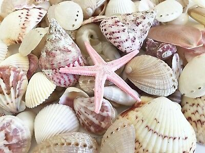 SHELLS MIX pink, pearl & white 2-6 cm ( for craft/wedding/home decoration)