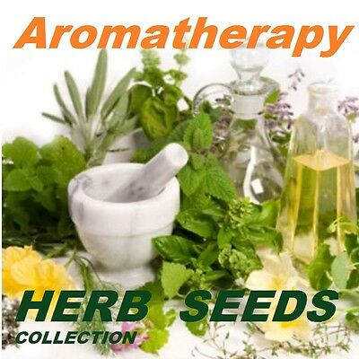 Aromatherapy Herb Seeds Collection 9 Varieties Aromatic Medicinal  Garden Plants