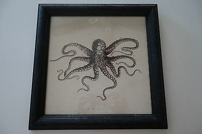 ABC'S Revenge -Production Used - Framed Nautical Octopus Picture - Josh Bowman