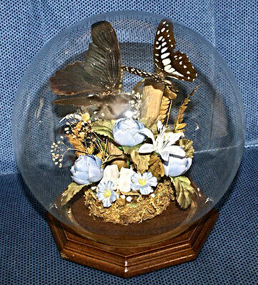 Vintage Real Butterfly Display Butterflies Glass Dome Wood Base