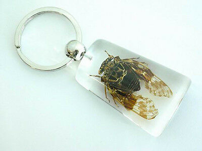 Real Insect Keychain in the clear acrylic, Cicada