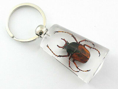 Real Insect Keychain in the clear acrylic, Large arm beetle
