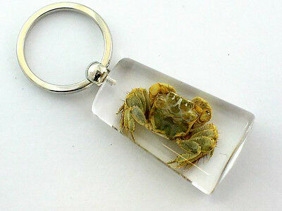 Real Insect Keychain in the clear acrylic, Crab