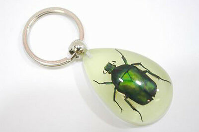 Real Insect Keychain in the clear acrylic,glowing in the dark, June bug