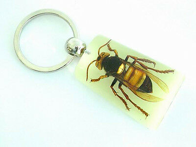 Real Insect Keychain glowing in the dark, Yellow Jacket, or angry bee