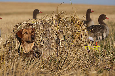 Avery Ground Force Dog Blind MOSSY OAK BLADES Camo Waterfowl Hunting New!