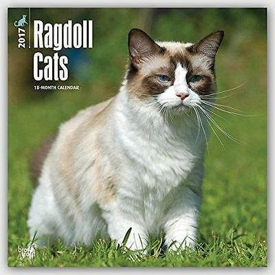 Ragdoll Cats 2017 Uk Square Wall Calendar New & Sealed By Brown Trout