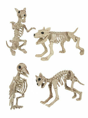 Skeleton Dog Cat Rat Bird Halloween Decorations