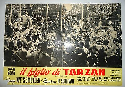 JOHNNY WEISSMULLER/TARZAN FINDS A SON /ME14S/ italy poster