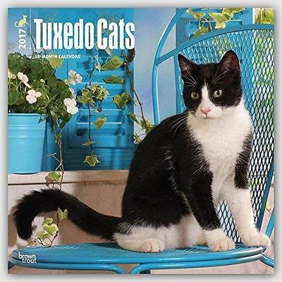 Tuxedo Cats Uk Square 2017 Wall Calendar By Brown Trout + Free Uk Postage