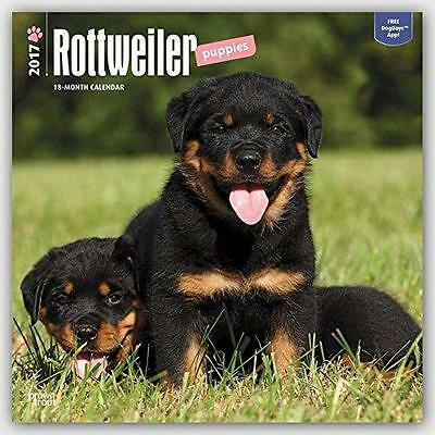 Rottweiler Puppies Square 2017 Uk Wall Calendar By Brown Trout + Free Uk Postage