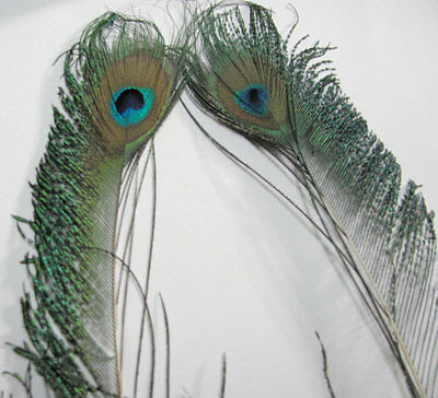 Peacock Sword Feathers with Eyes