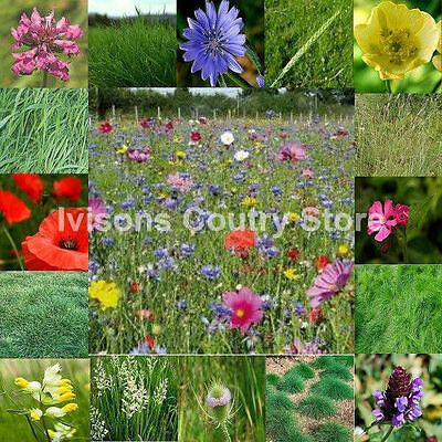 IVISONS MEADOW WILD FLOWER SEEDS 50/50 25g BUMBLE BEE BUTTERFLY MIX 3 UK SEED