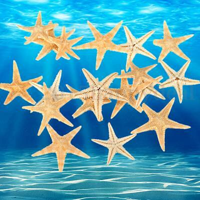 20x Mini Natural Starfish Shell Beach Sea Star Landscape Crafts DIY Making Decor