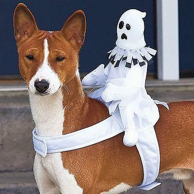 Halloween Dog Costumes Ride on Jack-o-Latern Pumpkin or on Ghost