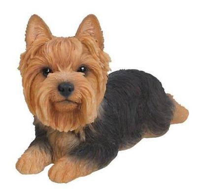 Yorkshire Terrier Puppy Pet Laying in Gift Box Vivid Arts No Box
