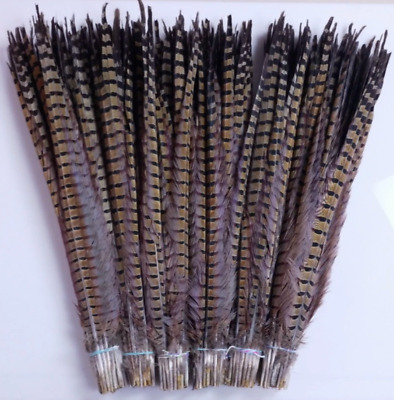3 Natural Pheasant Tail Feathers 47-55cm DIY Art Craft Millinery Vase Costume