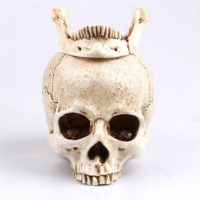 1X White Human Skull Resin Skull Model Medical Lifesize Realistic 1:1 20*15*15cm
