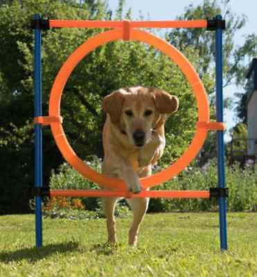 Agility Jumping Hoop Dog Training Outdoor Stretch Fun Sport Obedience Play Pet