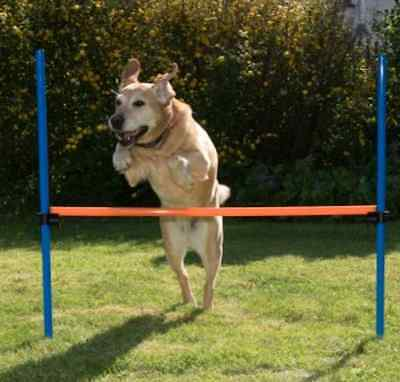 Dog Agility Hurdle Pole Fun Sport Obedience Play Training Outdoor Stretch Cource