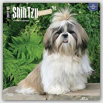 Shih Tzu Puppies 2017 Uk Square Wall Calendar New & Sealed