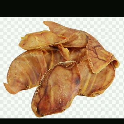 PIGS EARS SPECIALLY SELECTED LARGE ENGLISH 50 DOG TREAT CHEW NATURAL + Free Toy!