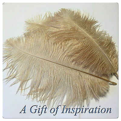 3 Perfect 15-20cm Gorgeous Tan/Beige OSTRICH feathers craft/millinery