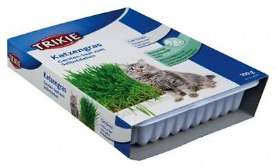 Trixie Cat grass 100 g in Dish