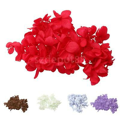 5g Preserved Dried Flowers Gift Box Decorations Home Garden DIY Materials