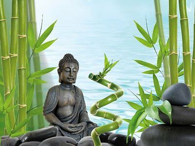 Tetra Buddha/ Bamboo Background Poster Pet Quick New UK SELLER UK STOCK