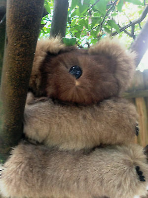 "VINTAGE REAL-FUR KOALA & JOEY ON HEAD RUBBER HANDS/NOSES 11"" Hard Body Glass Eye"