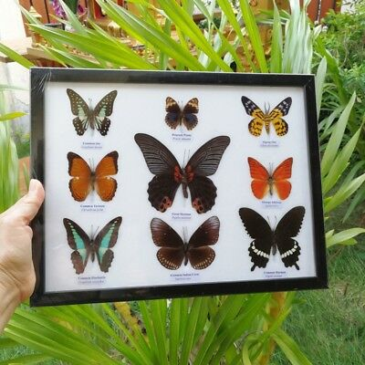 Real 9 Mix Butterfly Taxidermy Rare Frame Display Mounted Insect Collectible # 1