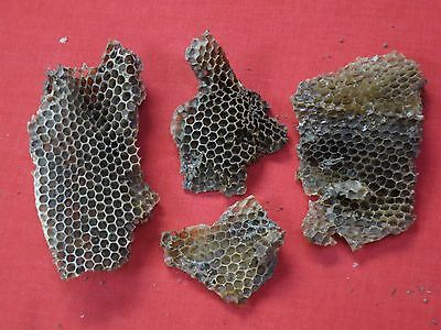 ( 4 ) Bee Honey Comb Wasp Nest / Pieces