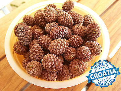 90 handpicked ecologically cleanest Adriatic Pine Tree small cones from Croatia