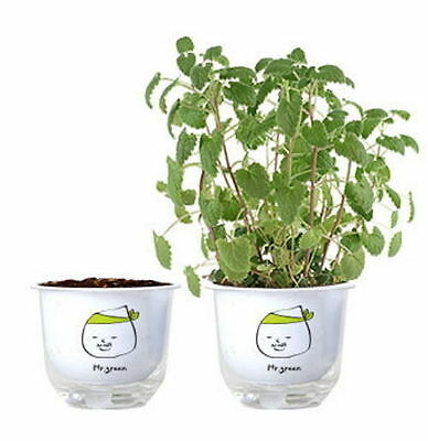 Catnip Seed Cat Grass Easy Growing Complete Kit Healthy Double Pot moo