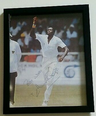 "CURTLY AMBROSE FRAMED CRICKET SIGNED IN PERSON 8 x 10 INCH PRINT COA ""GENUINE"""
