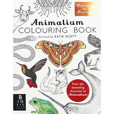 Animalium Colouring Book by Kate Baker (Paperback), Children's Books, Brand New