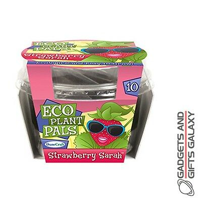 GROW YOUR OWN STRAWBERRY SARAH ECO PLANT SET KIT - novelty stocking filler gift