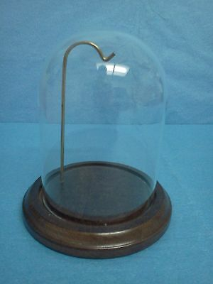 Top Quality GLASS DOME with WOOD BASE Display SMALL with Display Hook NEW