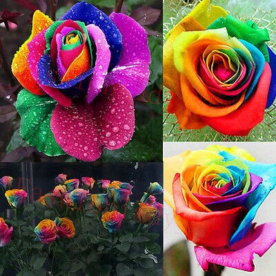 Rare Multi-Colors Rainbow Rose Flower Seeds Garden Plant, Other Colors Hot TSC