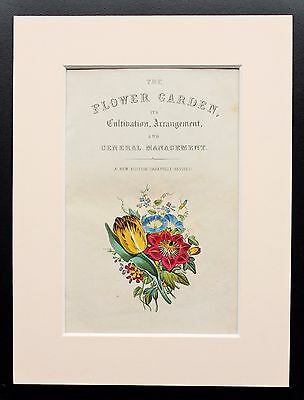 Title Page - Original Victorian Antique Hand Coloured Botanical Print, Mounted