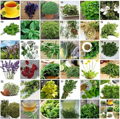 Herb Seeds Mediterranean Garden 35 Varieties  Aromatic Medicinal Spices Plants